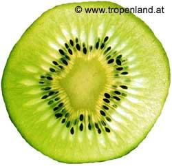 Kiwi-Actinidiachinensis