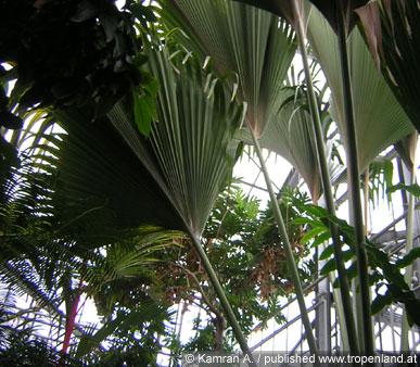 Exotische pflanzen selbst ziehen for Pflanzen wohnzimmer geeignet