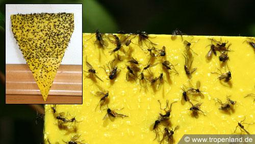 Gelbtafeln gelbsticker for Gelbsticker gegen fliegen